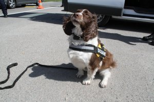 Belgian customs sniffer dog, ready for his job - detecting drugs. #DogsWithJobs #CustomsUnion https://t.co/RgMFfQNaBN