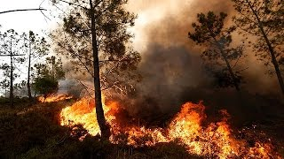 Fighting wildfires in Portugal and Spain