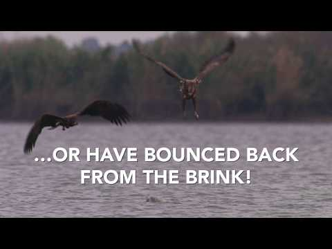 Celebrating 40 years of the EU Birds Directive